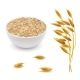 Vector Realistic Oat Ears, Grains and Bowl