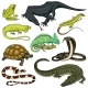 Set of Reptiles and Amphibians - GraphicRiver Item for Sale