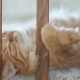 Cute Ginger Cat Lying in Child Bed. Fluffy Pet Poked Its Head Between Rails of Crib. Cozy Morning at - VideoHive Item for Sale