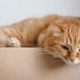 Cute Ginger Cat Lying on Craft Paper Box. Fluffy Petsettle To Sleep and Starring in Camera - VideoHive Item for Sale