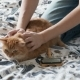 Woman Combs a Cute Ginger Cat Fur. Fluffy Pet Frowning of Pleasure - VideoHive Item for Sale