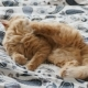 Cute Ginger Cat Lying in Bed. Fluffy Pet Is Scratching Its Ears and Going To Sleep. Cozy Home - VideoHive Item for Sale