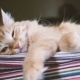 Cute Ginger Cat Lying on Striped Fabric. Fluffy Pet Comfortable Settled To Sleep. - VideoHive Item for Sale