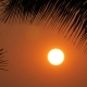 Stunning Beauty of the Red Sunset of a Large Sun Against the Backdrop of Palm Leaves - VideoHive Item for Sale