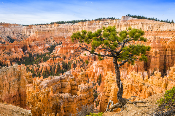 Bryce Canyon at Dawn - Stock Photo - Images