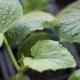 Growing Cucumbers Seedlings - VideoHive Item for Sale