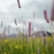 Mountain Field with Wild Flowers - VideoHive Item for Sale