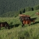 The Mountain Landscape with Grazing Horse - VideoHive Item for Sale