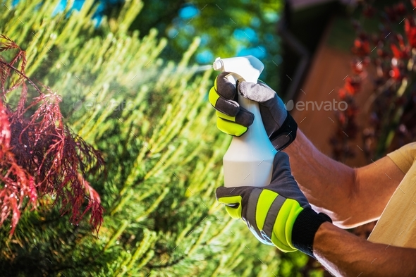 Insecticide Garden Plants - Stock Photo - Images