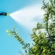 Spraying Insecticide on Tree - PhotoDune Item for Sale