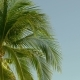 Coconut Palm Under Sky, - VideoHive Item for Sale