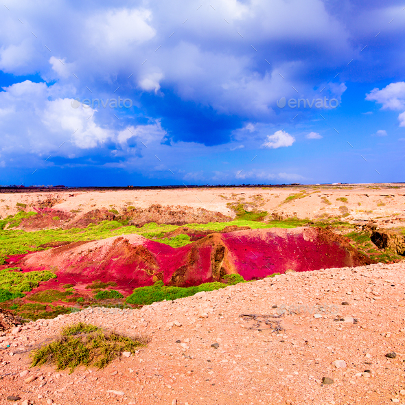 Fashion colorful landscape. Minimal Nature Stock Photo by EvgeniyaPorechenskaya