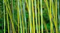 Bamboo trees in garden - PhotoDune Item for Sale