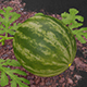 Watermelon Animated - 3DOcean Item for Sale