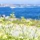 Landscape Beach Flowers Sea - VideoHive Item for Sale