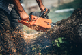 portrait of lumberjack cutting tree in the garden with gasoline chainsaw.  - PhotoDune Item for Sale