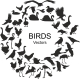 Collection of Silhouettes of Different Bird Species