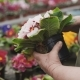 Florist Caresing About Flower Seedlings, Tearing Faded Leaves - VideoHive Item for Sale