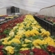 View of Different Colourful Kinds of Flowers in Greenhouse . - VideoHive Item for Sale