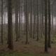 Spooky Woodland - VideoHive Item for Sale