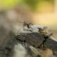 Ant Sitting Still on the Edge of the Old Wooden Log - VideoHive Item for Sale