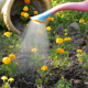 Watering Flowers in the Garden - VideoHive Item for Sale
