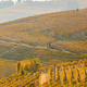 Vineyard in autumn with yellow leaves and path in a sunny day - PhotoDune Item for Sale