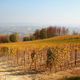 Vineyard in autumn with yellow leaves and hills in Italy - PhotoDune Item for Sale