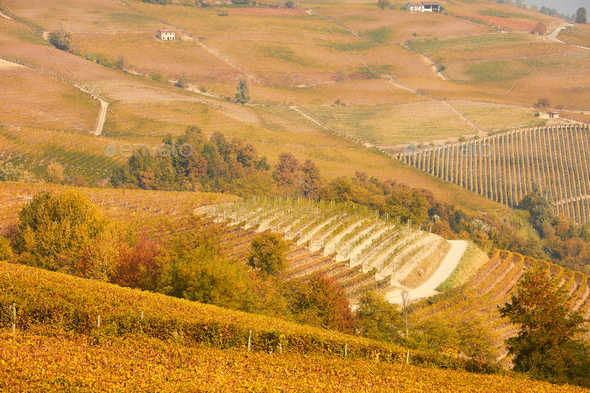 Vineyards and hills in autumn with yellow leaves in a sunny day in Italy - Stock Photo - Images