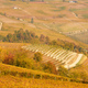 Vineyards and hills in autumn with yellow leaves in a sunny day in Italy - PhotoDune Item for Sale