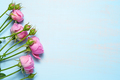 Pink roses on blue background - PhotoDune Item for Sale
