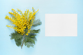 Flowers of mimosa and blank greeting card on blue table - PhotoDune Item for Sale
