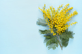 Mimosa flowers on blue table top view - PhotoDune Item for Sale