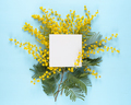 Greeting card and mimosa flowers on blue background - PhotoDune Item for Sale