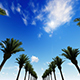 Driving Through Palm Trees - VideoHive Item for Sale