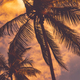 Palm trees over sunset sky background - PhotoDune Item for Sale