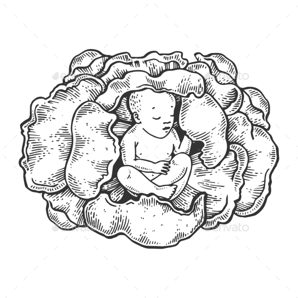 Baby in Cabbage Engraving Vector Illustration - Miscellaneous Vectors