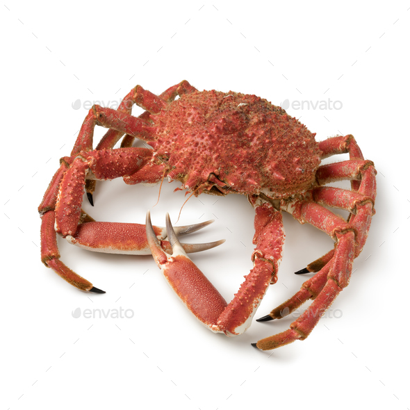 Whole cooked spider crab - Stock Photo - Images