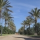 Palm Trees Along the Sidewalk, Spain - VideoHive Item for Sale