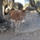 The Donkey Is On The Mountainside - VideoHive Item for Sale