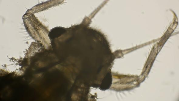 Apron Under the Microscope