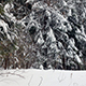 Everything in Snow in Winter Forest - VideoHive Item for Sale