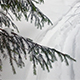 Shaking Firs in Winter Forest - VideoHive Item for Sale