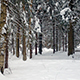 Snowy Trees in Winter Forest - VideoHive Item for Sale