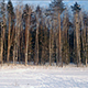 Winter Forest in Sunlights - VideoHive Item for Sale