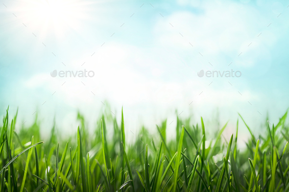 Spring background - Stock Photo - Images