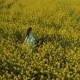 Beautiful Woman in Blue Dress Walks Among Yellow Flowers at the Field - VideoHive Item for Sale