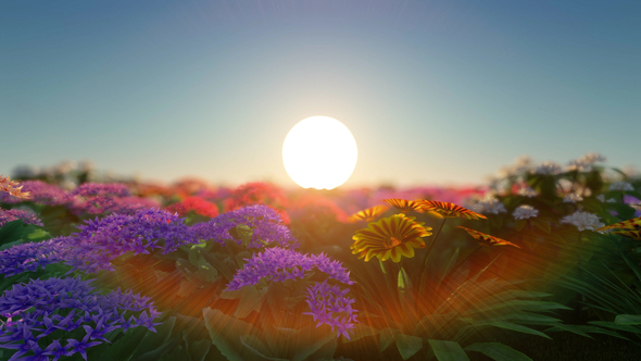 Flower field sunset Orange Videohive Flower Field At Sunset By Vokri Videohive