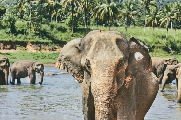 Elephants are bathing - Stock Photo - Images