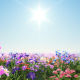 Flowers in Daylight - VideoHive Item for Sale